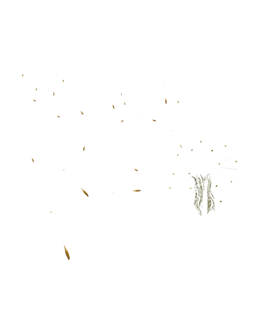 dandelion_site.png